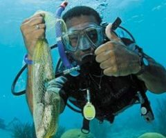 Footage from the 2006 Curaçao Dive Festival. Photograph courtesy the Curaçao Tourism Corp - North America