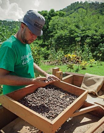 Sorting the cocoa beans. Photography by Alex Smailes / Abovegroup Ogilvy