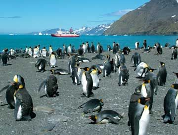 Exploring Antarctica among the penguins. Photograph courtesy GAP Adventures