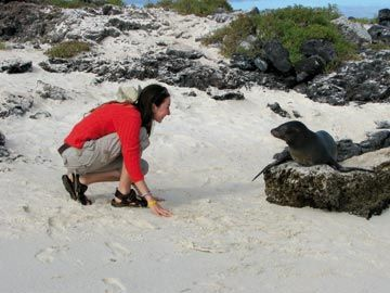 Galapagos wildlife up close. Photograph courtesy GAP Adventures