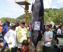 The 2008 winning team of Indigo with an 890lb blue marlin caught by 15-year-old Sean Mendonca – the fish broke the World Junior. Photograph courtesy Trinidad & Tobago game fish association