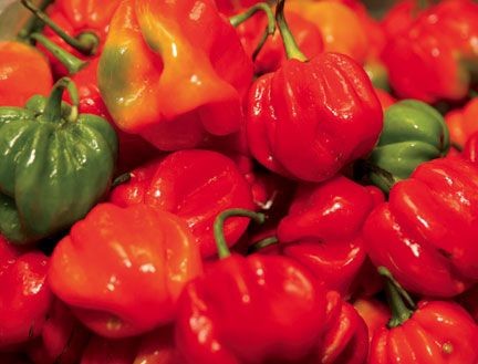 Scotch bonnet peppers. Photograph by Shirley Bahadur