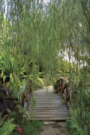 The bridge over the lily pond and the weeping willow. Photograph courtesy Andromeda Gardens/Jemima Stuart