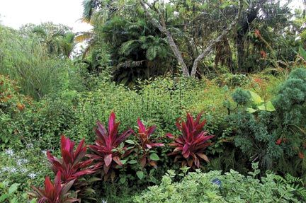 An area above the pond showing pink tip cordelyne, palms, chinaman's hats (orange) and cat's whiskers (white). Photograph courtesy Andromeda Gardens/Jemima Stuart