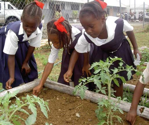 Students at Speyside Primary Anglican Church School tend their vegetable and herb beds. Photograph by James Fuller