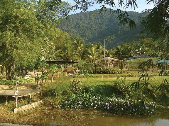 The park, with the Northern Range looming in the distance. Photograph courtesy the Maracas Bay AgriTourism Park