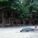 Looking for the leatherback in Trinidad