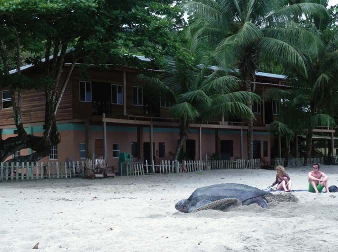 A nesting turtle, with the hotel in the background. Photograph by Piero Guerrini