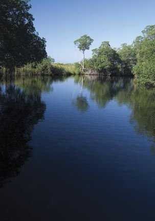 "On Black River approaching ""Mangrove Avenue"" Photograph by Jeremy FrancisOn Black River approaching ""Mangrove Avenue"" Photograph by Jeremy Francis"