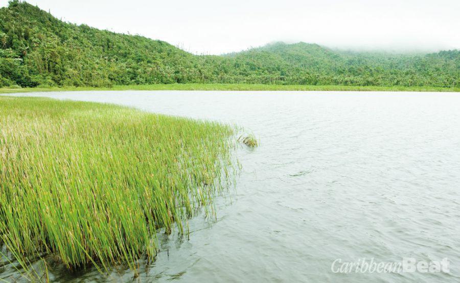 Grand Etang's crater lake. Photograph by PHB.CZ (Richard Semik)/Shutterstock.com