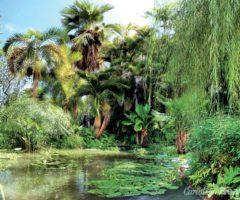 Andromeda Gardens, Bathsheba, Barbados. Photograph by John Webster
