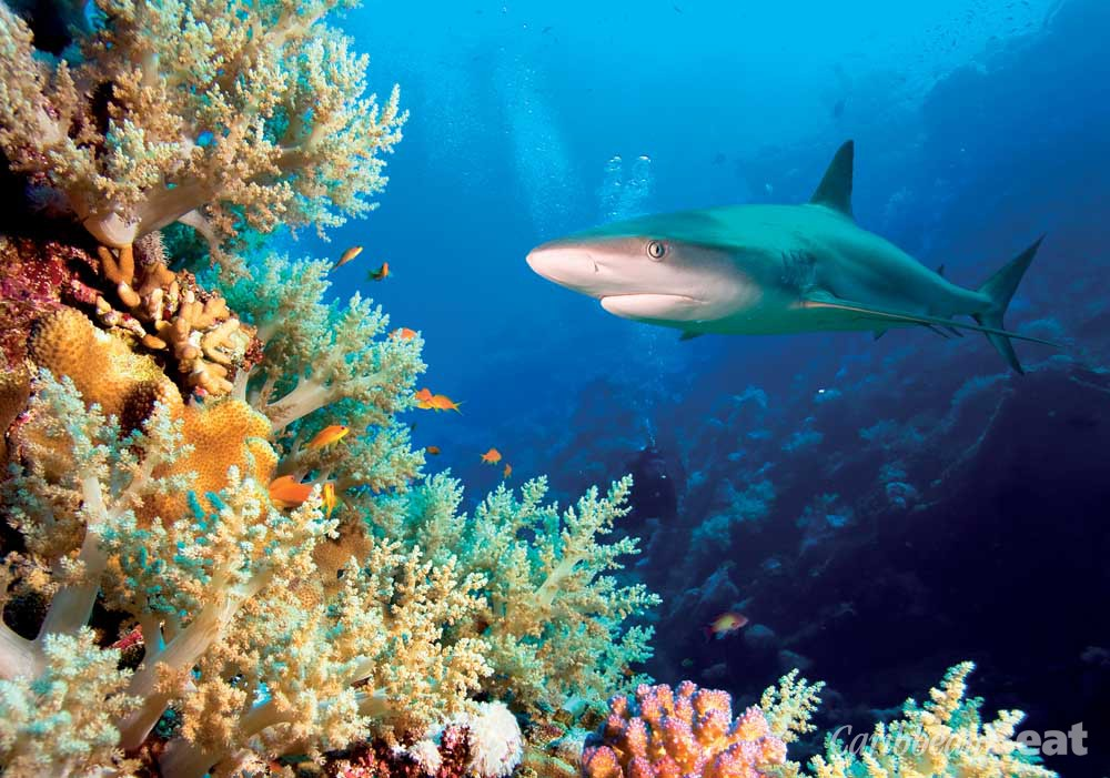Sharks and other large predatory fish are vital to the marine ecosystem. Photograph by frantisekhojdysz/shutterstock.com