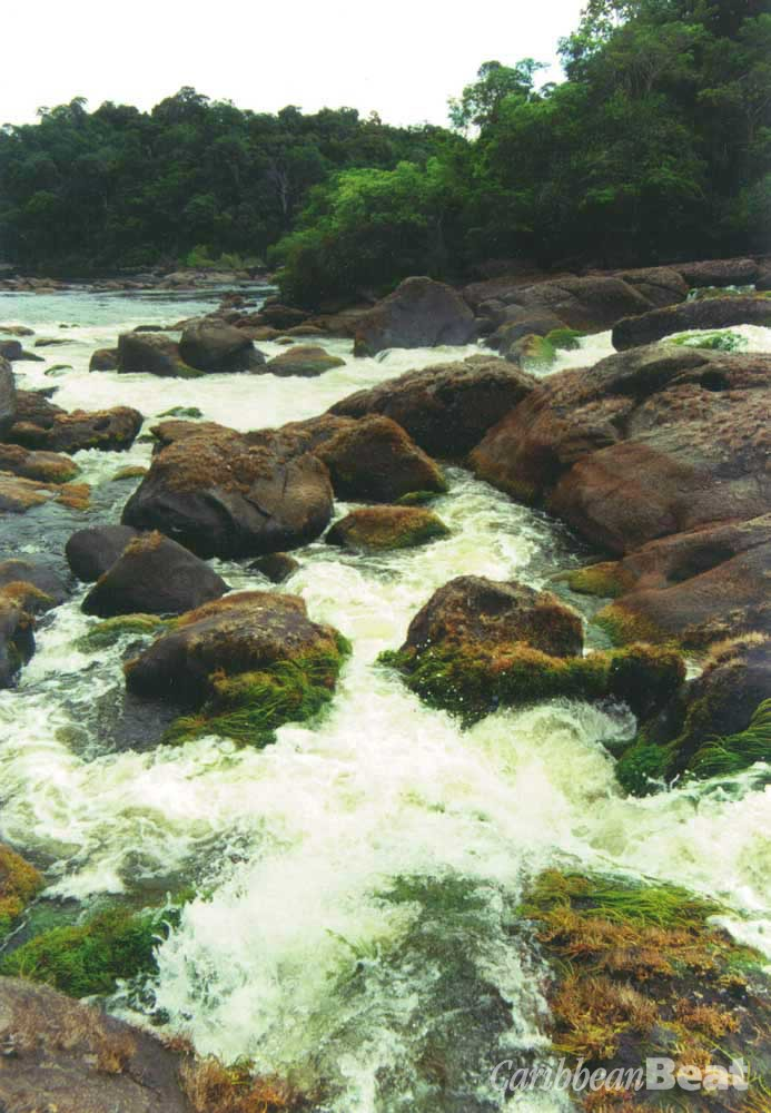 Rapids in the interior. Photograph by Reto Kuster