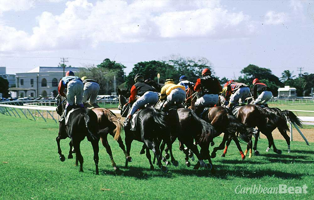 And they're off! Horse-racing at the Garrison Savannah. Photograph by Mike Toy