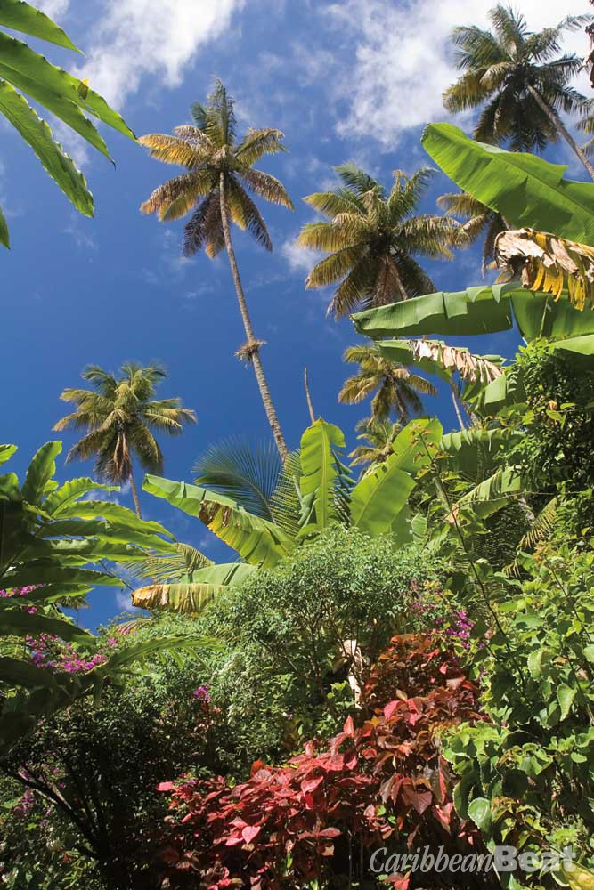 St Lucia's lush landscape has long inspired the island's most famous poet, Nobel laureate Derek Walcott. Photograph ©STEVEGEER/ISTOCK.COM