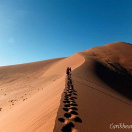 The trek to the summit of  Big Daddy follows the giant sand  dune's sloping crest. Photograph by Ishwar Persad