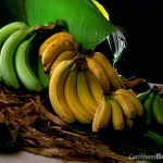 Bananas: food of the gods?