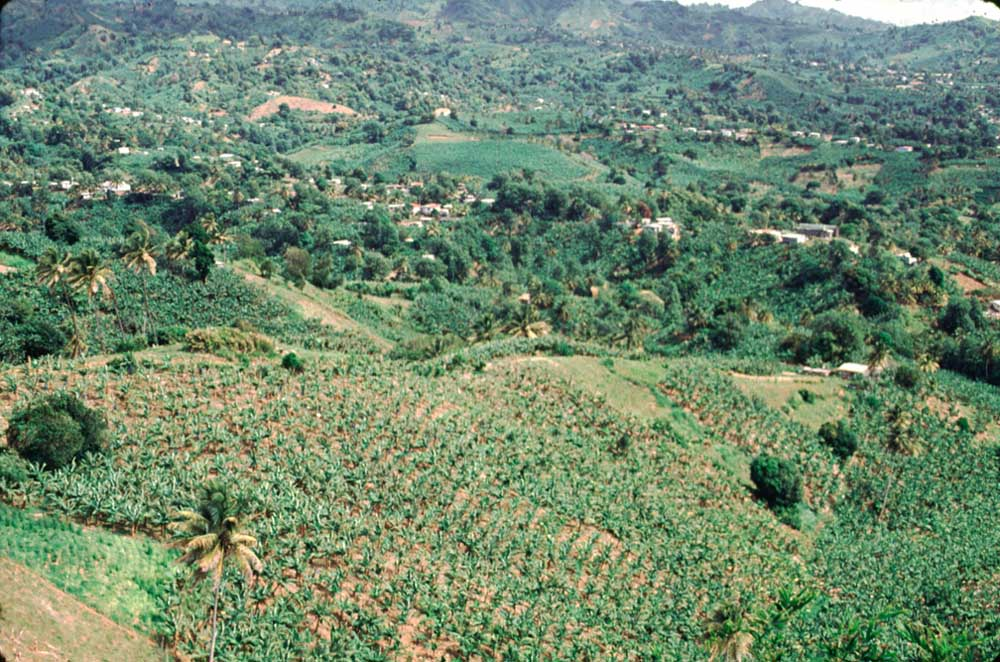 Banana plantation, Mesopotamia Valley. Photograph by Chris Huxley