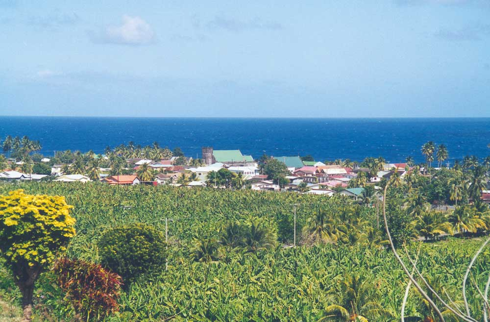 Looking over the banana fields towards the town of Georgetown on the Windward coast. Photograph by Tony Da Silva