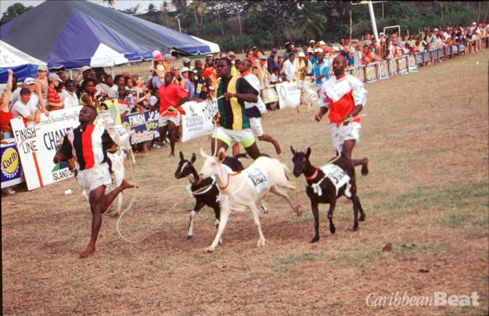 Buccoo goat race, Tobago. Photograph by James Quashie