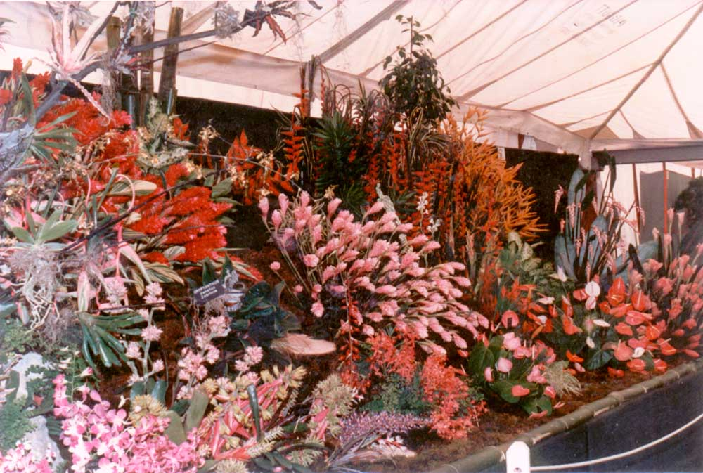 Trinidad and Tobago's exhibit at Chelsea, 1987. Photograph courtesy Trinidad and Tobago Horticultural Society