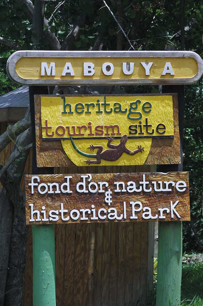 Mabouya. Photograph by Chris Huxley