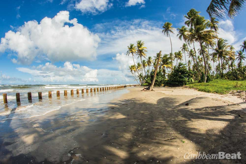 Enjoying a breezy day at Manzanilla Bay. Photograph by Aaron Richards