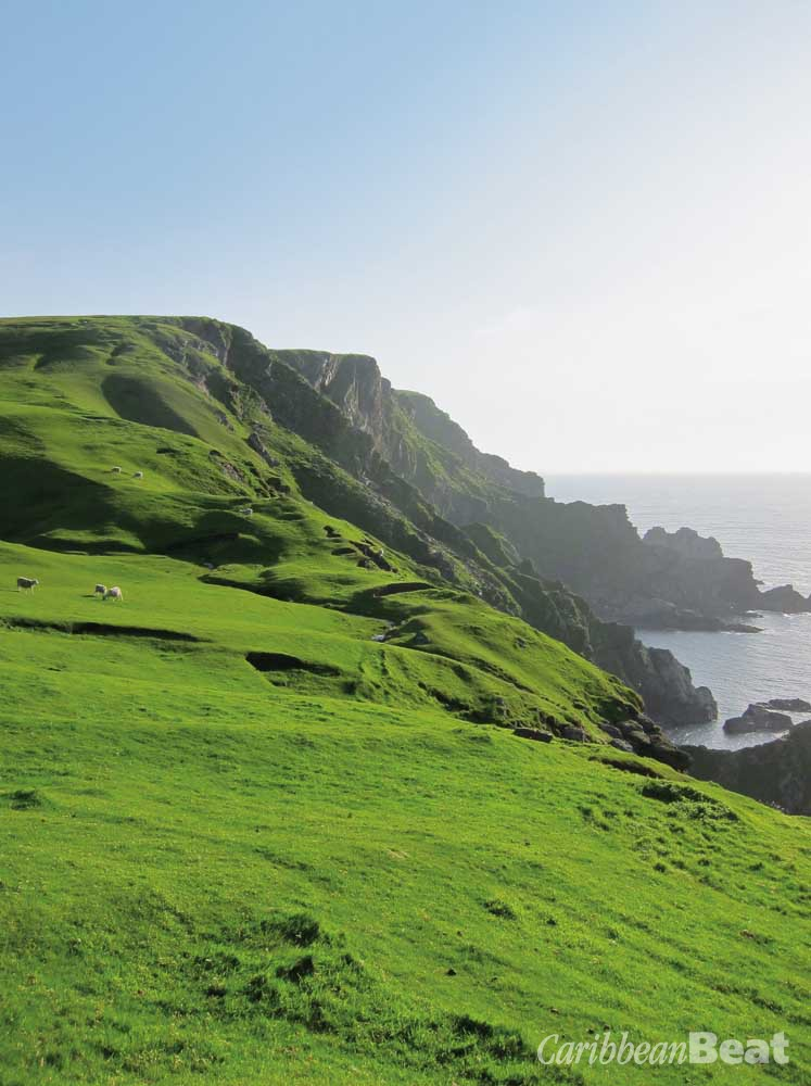 The green cliffs of Hermaness are home to sheep and seabirds. Photograph by Nicholas Laughlin