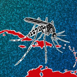 Once bitten: Chikungunya in the Caribbean