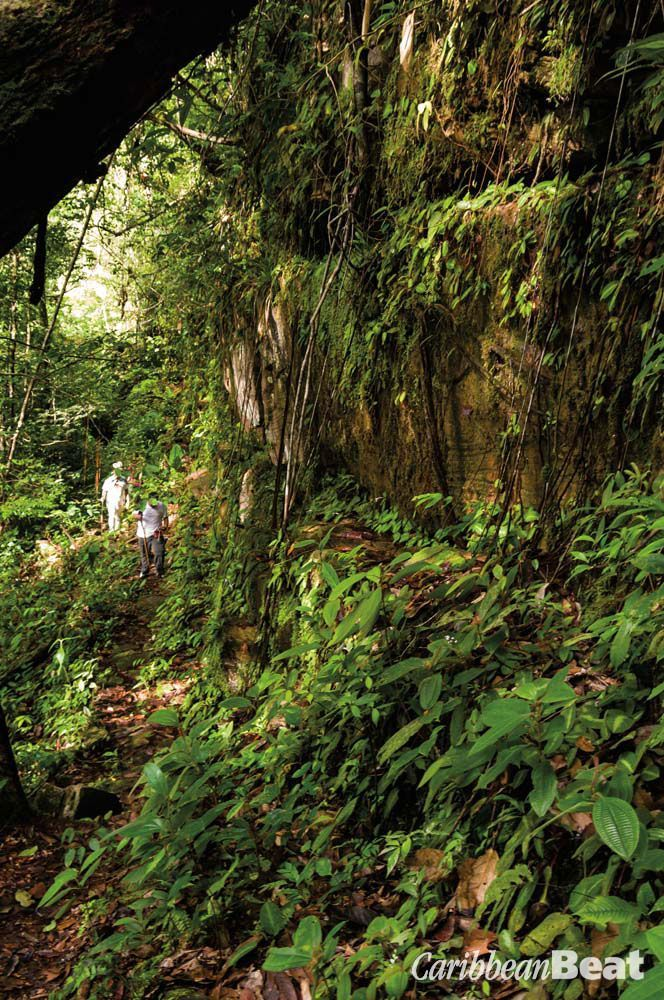 Hiking up the near-vertical side of the Potaro gorge. Photograph by Nikhil Ramkarran