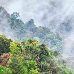 Tobago: green as an island