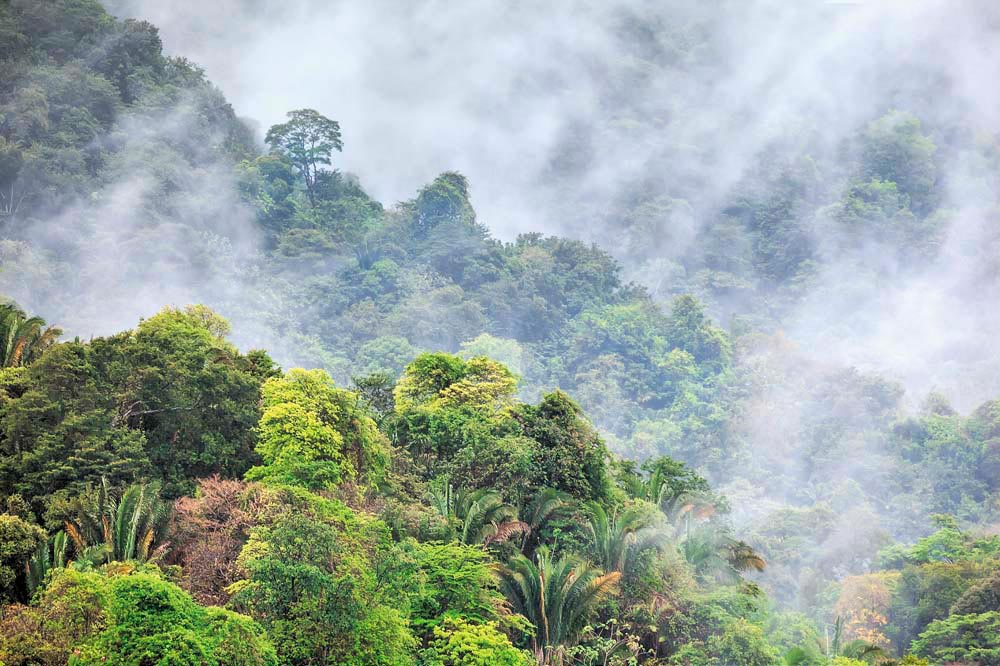 The protected forest of Tobago's Main Ridge is one of the Caribbean's natural treasures. Photograph by Chris Anderson