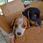 Kathryn Cleghorn and Animals Alive: dogs' best friend