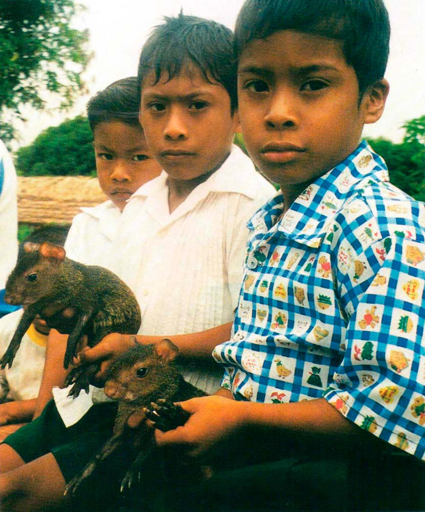 hese Wai Wai children are for more interested in the camera than in their agoutis. Photograph by Anna Nicholas