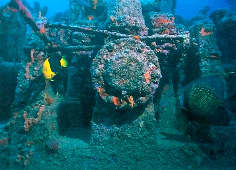 Rock beauty, left, and French angelfish on the bow of the Stavronikita. Photograph by Mike Toy