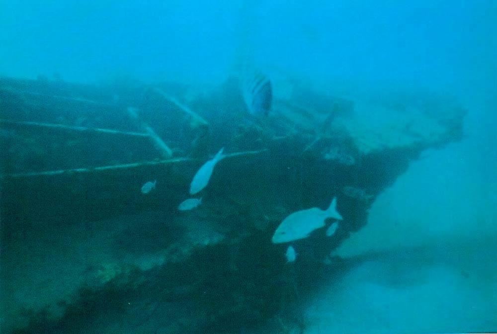 Wreck of the Ce Trek. Photograph by Mike Toy