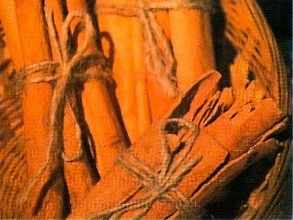 Cinnamon. Photograph by Sean Drakes/ Blue Mango