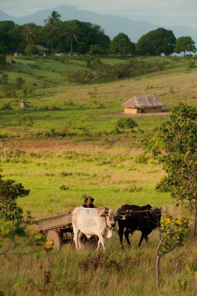 Nappi, Guyana. Photo by Pete Oxford