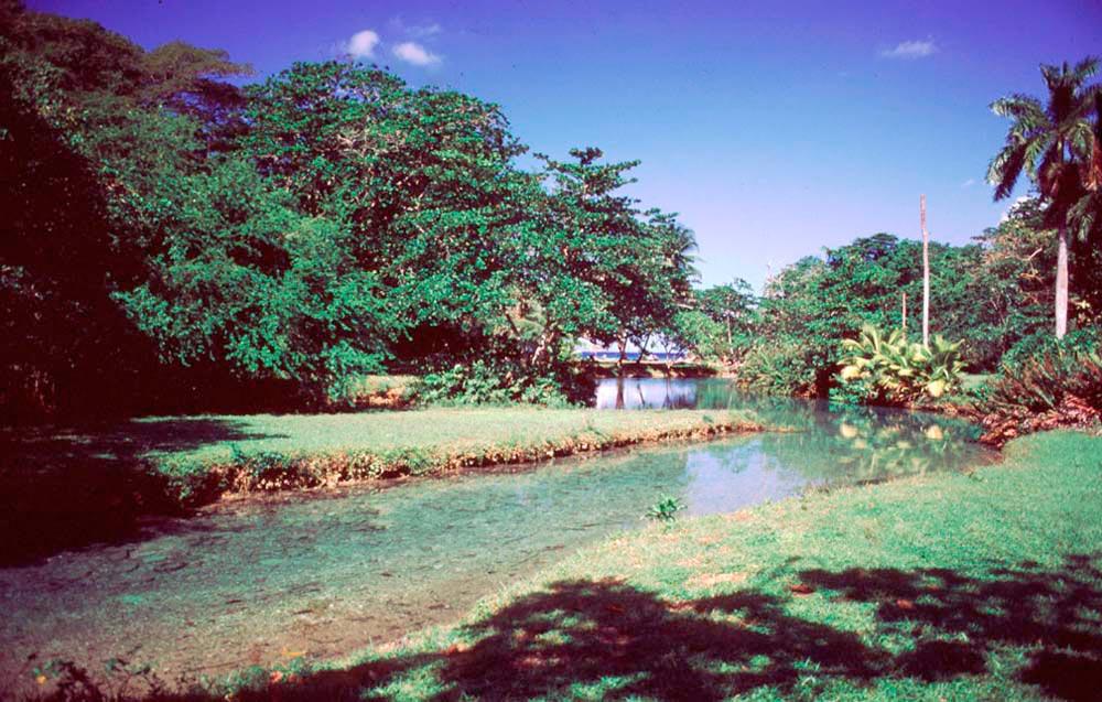 Frenchman's Creek, near Port Antonio, Portland. Photograph by Mike Toy