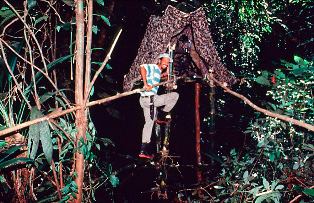 Neckles in the Tobago rain forest. Photo courtesy Roger Neckles