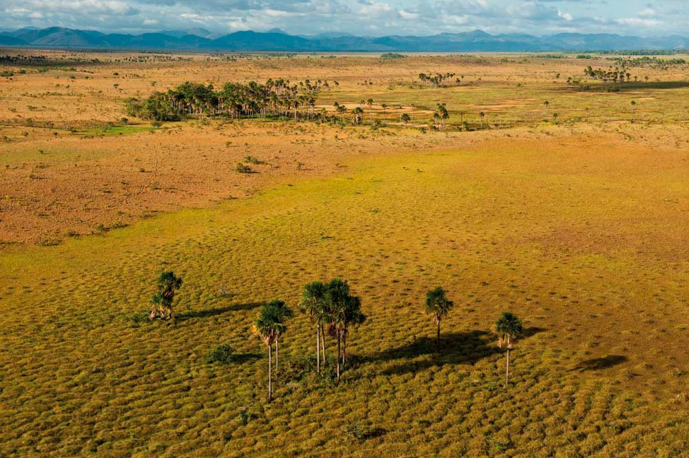 Dotted with palm trees and clumps of forest, the Rupununi Savannah sprawls towards the Kanuku Mountains. Photo by Pete Oxford