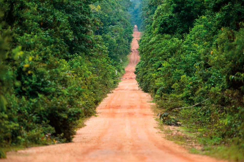 A red dirt road runs through the protected forest at Iwokrama, heading for the Rupununi Savannah and the Brazilian border. Photo by Pete Oxford