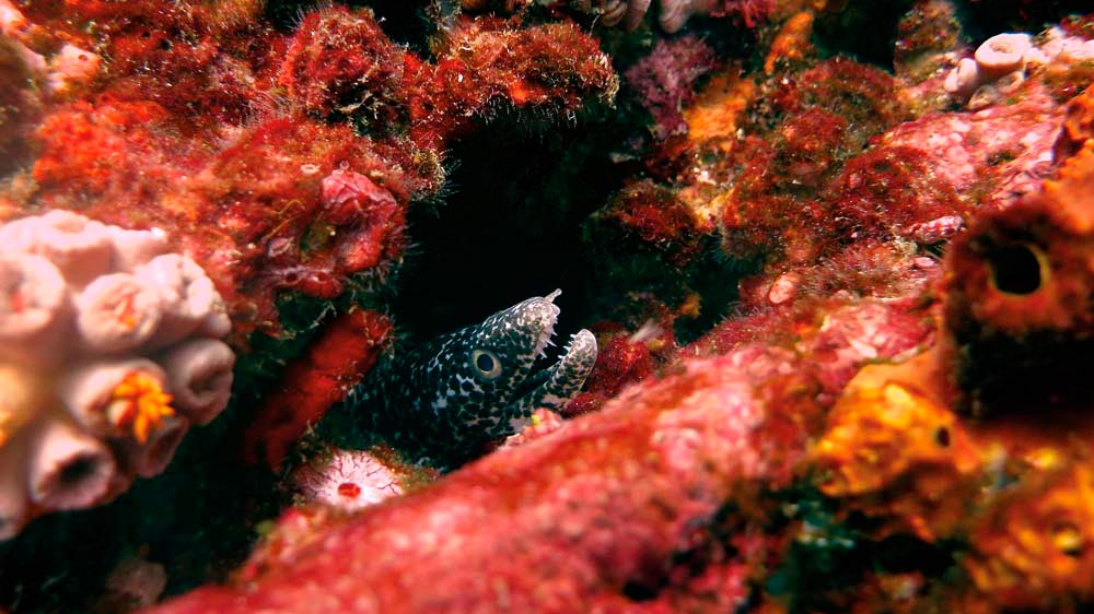 Photo by Neil Cook, Environmental Research Institute Charlotteville (ERIC)