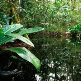 It may look like the heart of the Amazon rainforest, but this stretch of wilderness is on the outskirts of Suriname's capital, Paramaribo. Photo by Ariadne Van Zandbergen