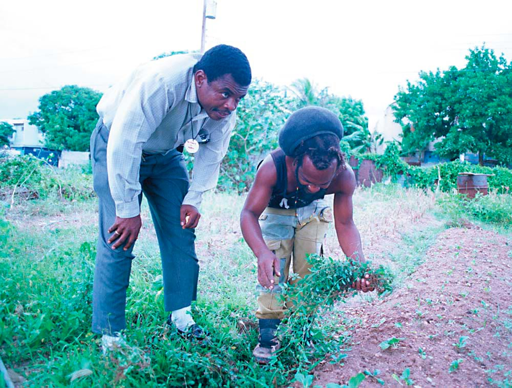 """Wilmott with """"Deanie"""", who runs an urban farm project started by Wilmott and Lorna Stanley with help from the Jamaican government. Photograph by Wayne Tippett"""