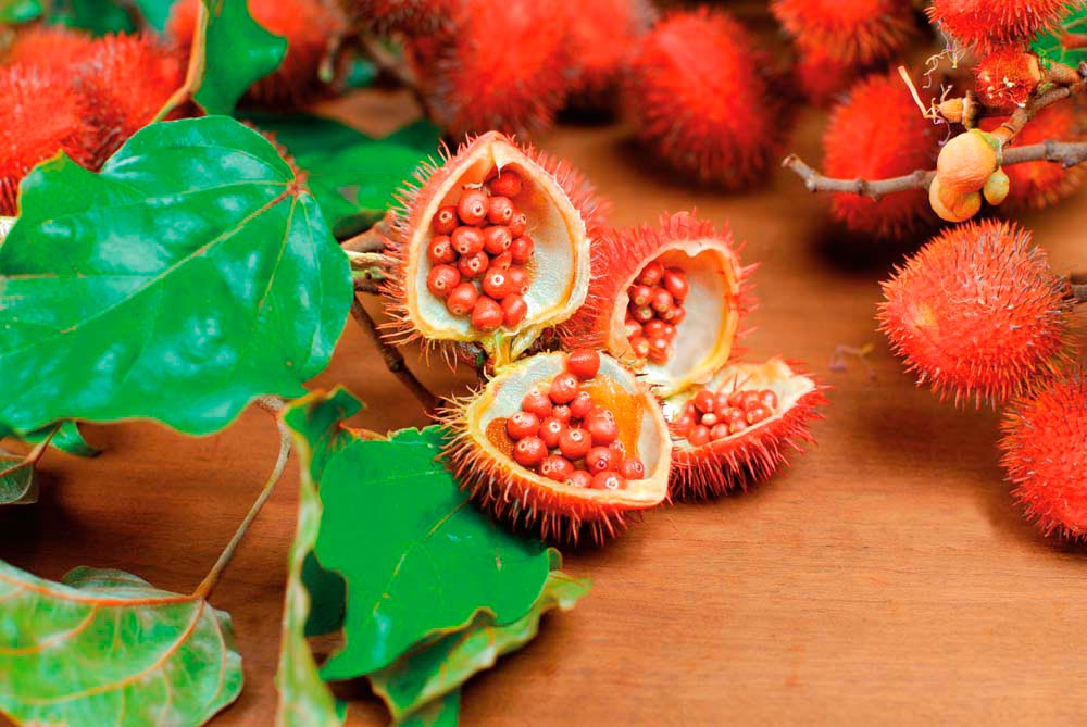 The seeds of the roucou tree — also known as achiote — are used to make annatto, a mildly peppery seasoning and natural food colouring. Photo by Rodrigo Carneiro Moreira/Shutterstock.com