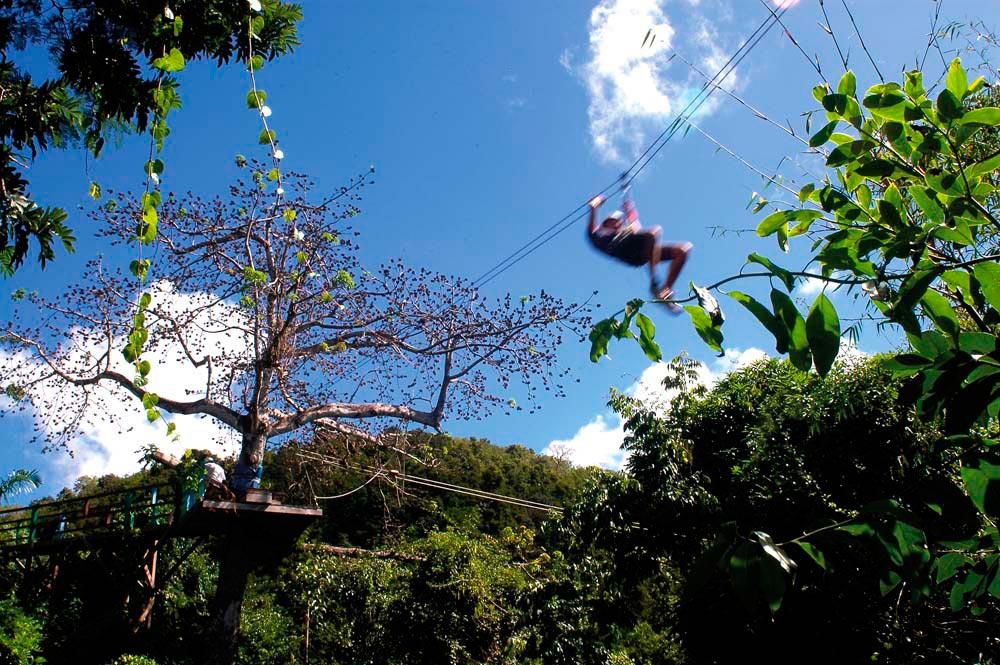 Photo courtesy Antigua Rainforest Company