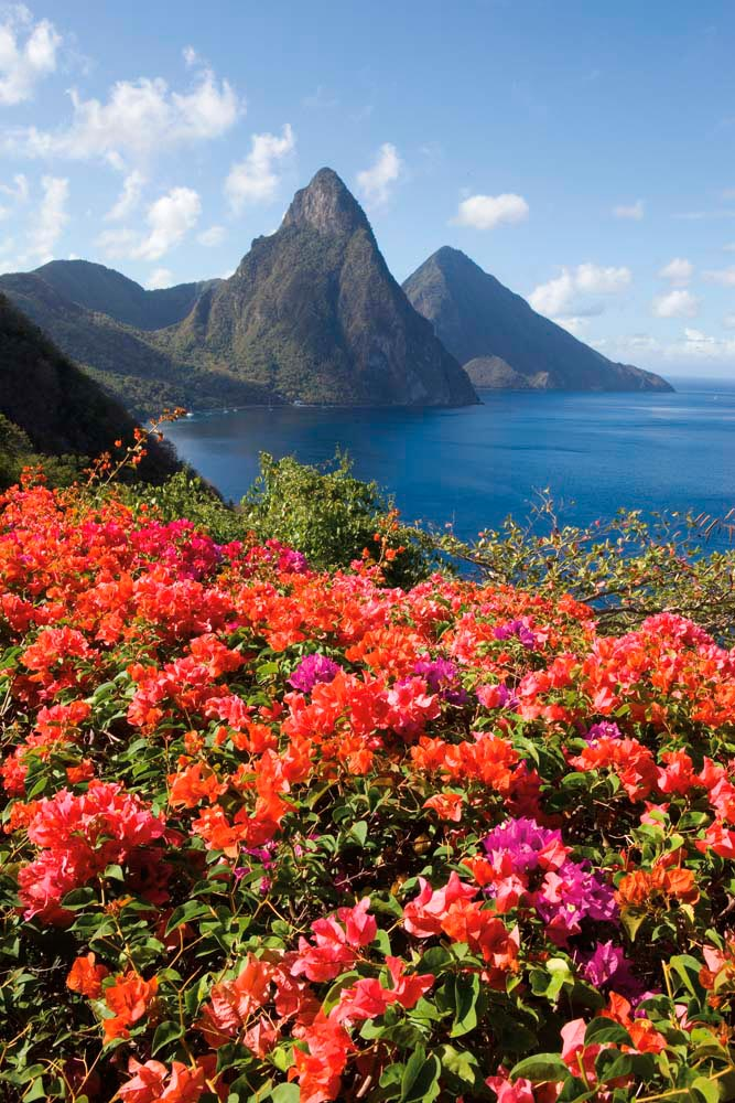 The twin Pitons rise spectacularly from St Lucia's lush south-western coast. Photo by Brent Winebrenner/LPI/Getty Images