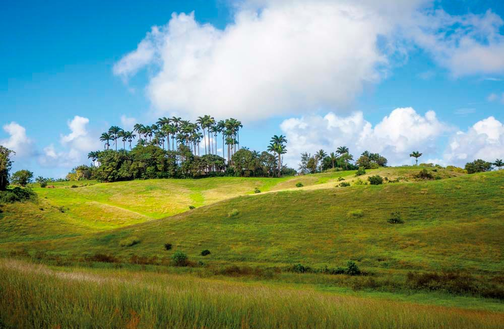 A classic Barbados landscape of gently rolling green hills. ©iStock.com/Stockfinland
