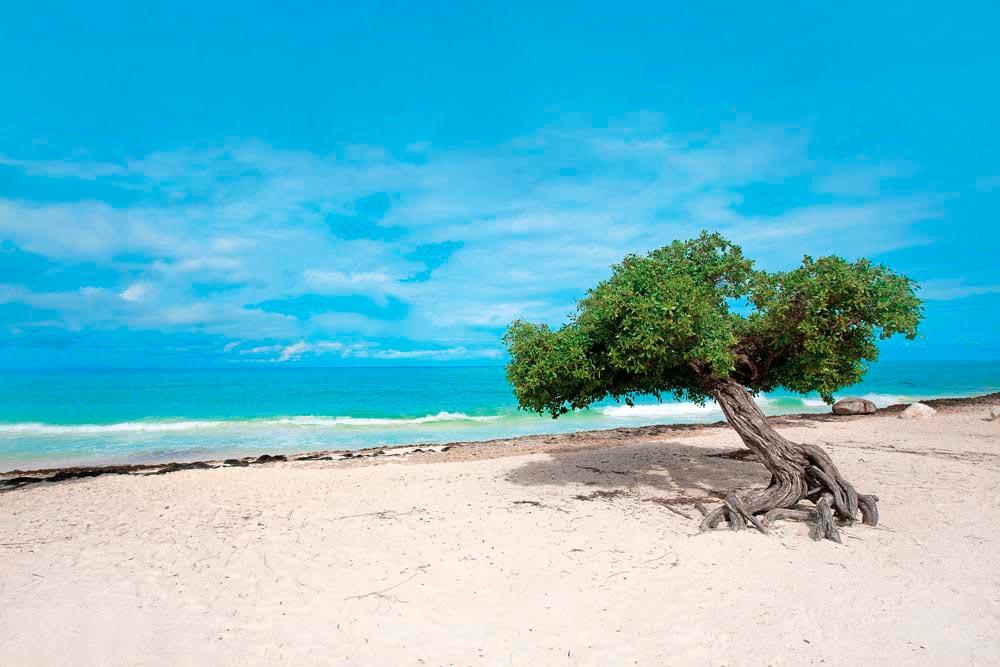 E is for Eagle Beach, Aruba. Photo by Kjersti Joergensen/Shutterstock.com